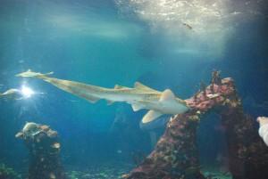 Rekin - Afrykarium we Wrocławiu